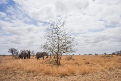 Elephanty Landscape